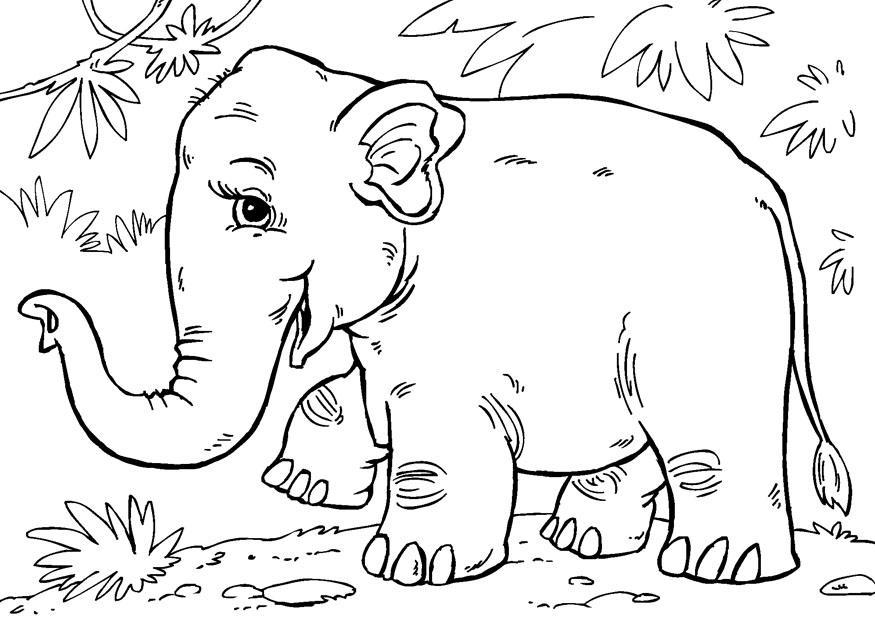 disegno da colorare elefante asiatico  cat 27854