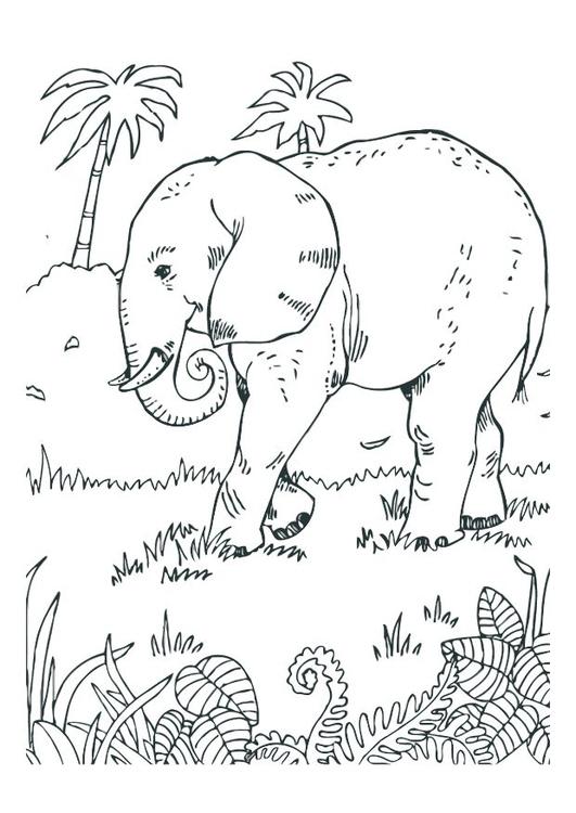 Disegno Da Colorare Elefante Cat 12527