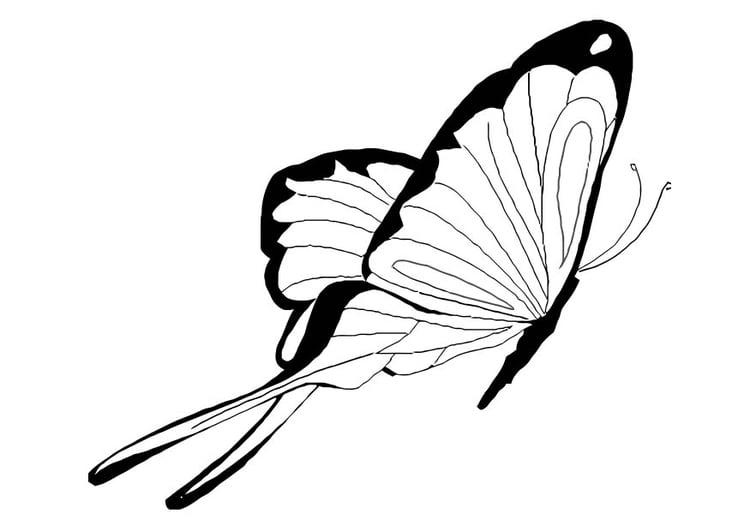 Disegno Da Colorare Farfalla Cat 10922