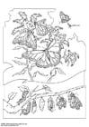 Disegno da colorare farfalla Mariposa