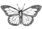 Disegno da colorare farfalla