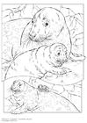 Disegno da colorare foca grigia