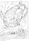 Disegno da colorare foca leopardo