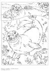 Disegno da colorare foca monaca