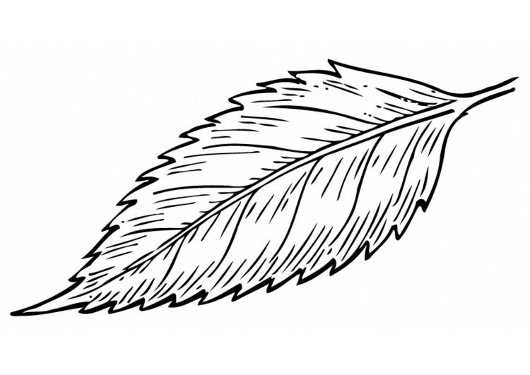 Disegno da colorare foglia cat 12949 for Disegno giardino da colorare