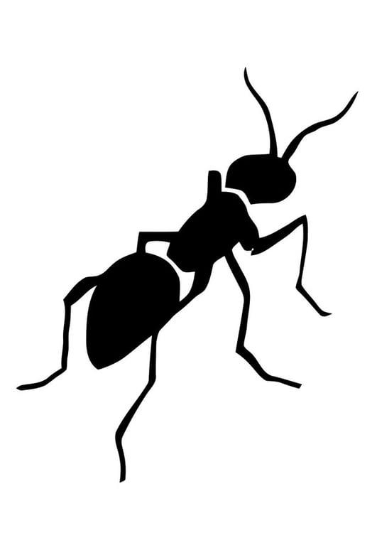 Disegni Da Colorare Animali Formica.Disegno Da Colorare Formica Disegni Da Colorare E Stampare Gratis