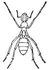 Disegno da colorare formica