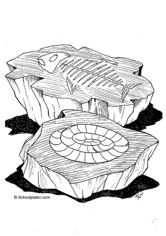 Disegno Da Colorare Fossile Cat 2865