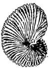 Disegno da colorare fossile