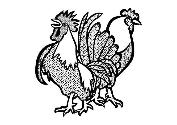 Disegno Da Colorare Gallo E Gallina Cat 29642