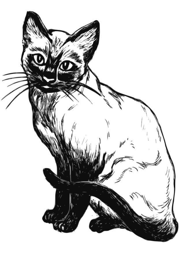 Disegno Da Colorare Gatto Cat 18573