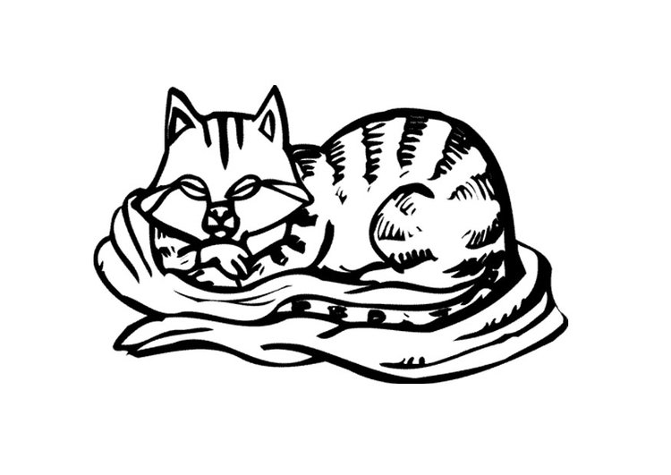 Disegno Da Colorare Gatto Cat 11596