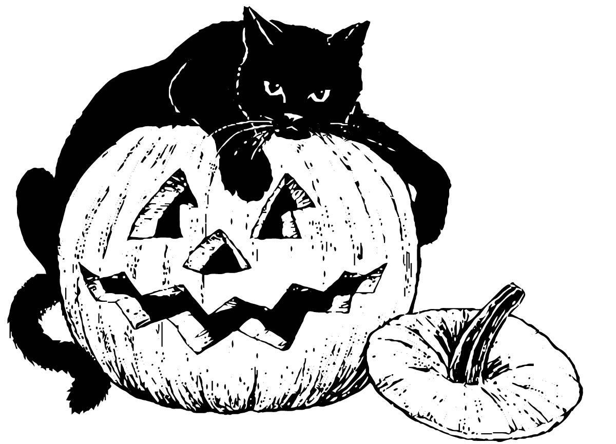 Disegno Da Colorare Gatto Nero Sulla Zucca Cat 16101 Images