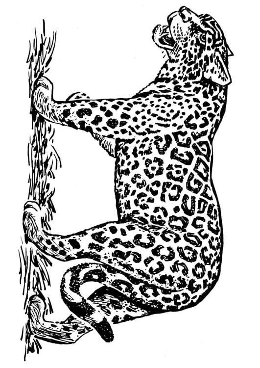 Simple Jaguar Coloring Page