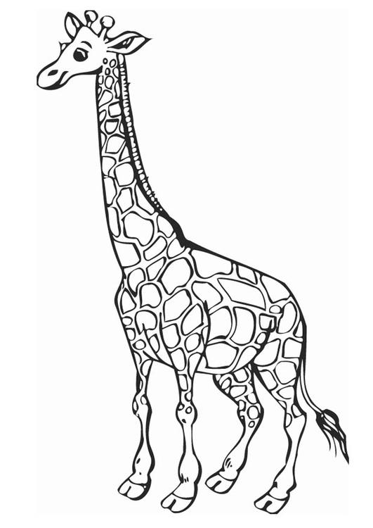Disegno Da Colorare Giraffa Disegni Da Colorare E Stampare Gratis