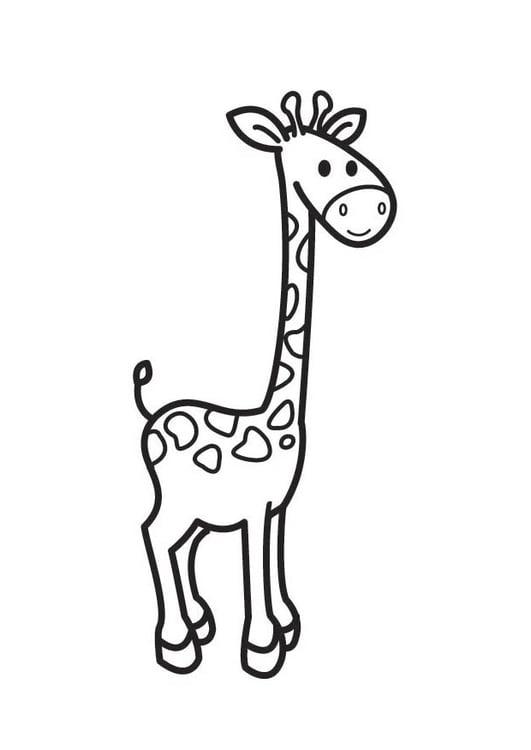 Disegno Da Colorare Giraffa Cat 17684