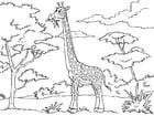 Disegno da colorare giraffa