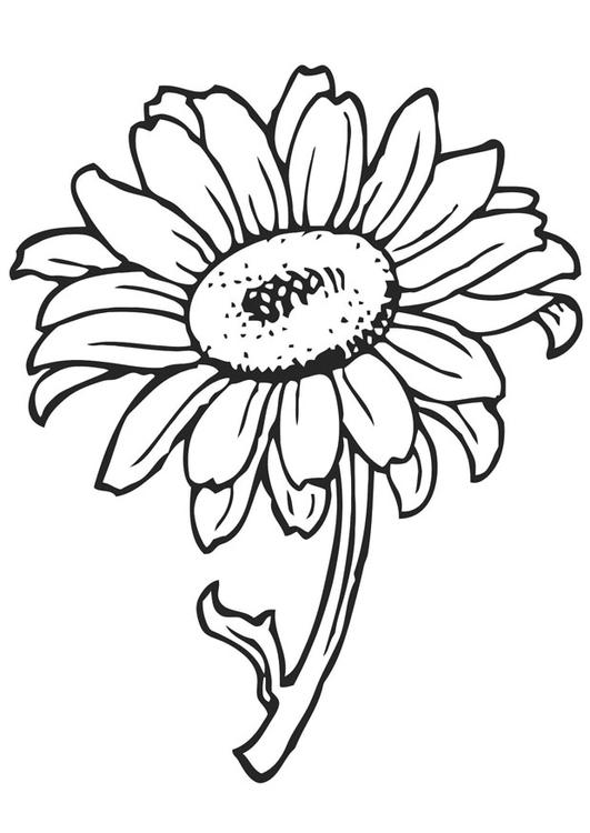 Disegno da colorare girasole cat 21202 for Sole disegno da colorare