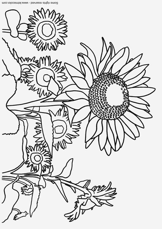 Disegno Da Colorare Girasoli Cat 9791 Images