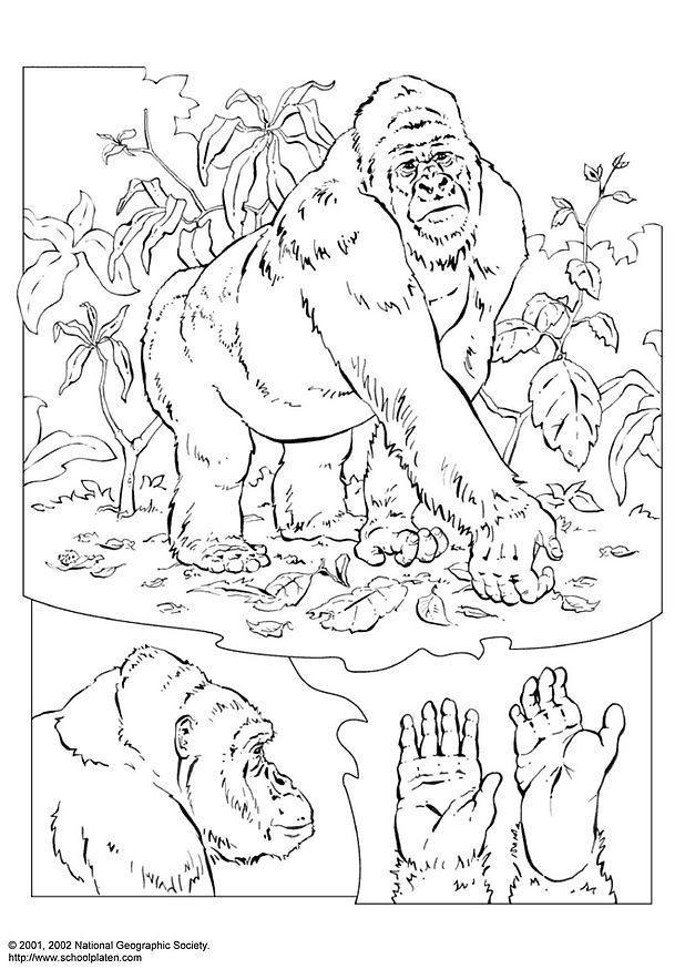 disegno da colorare gorilla disegni da colorare e