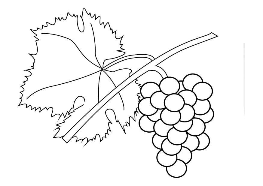 Uva Da Colorare: Disegno Da Colorare Grappolo D'uva
