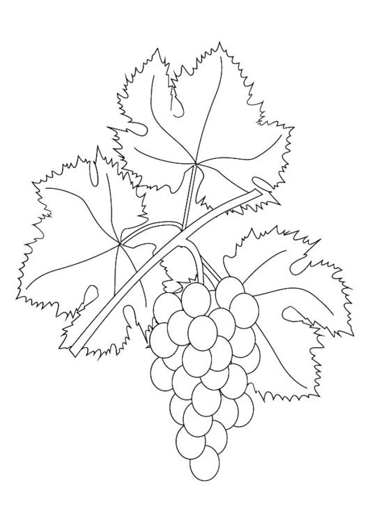 Disegno Da Colorare Grappolo Duva Cat 9876