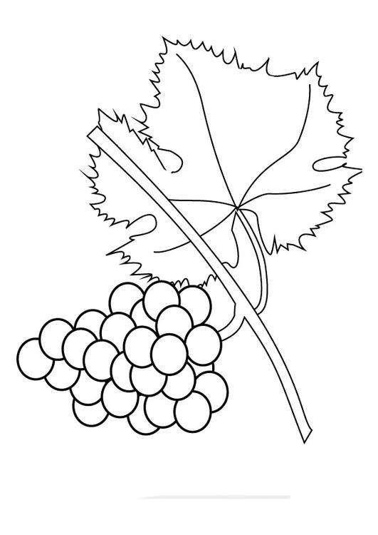 Disegno da colorare grappolo d'uva - Cat. 9857.