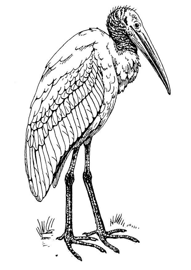 disegno da colorare ibis