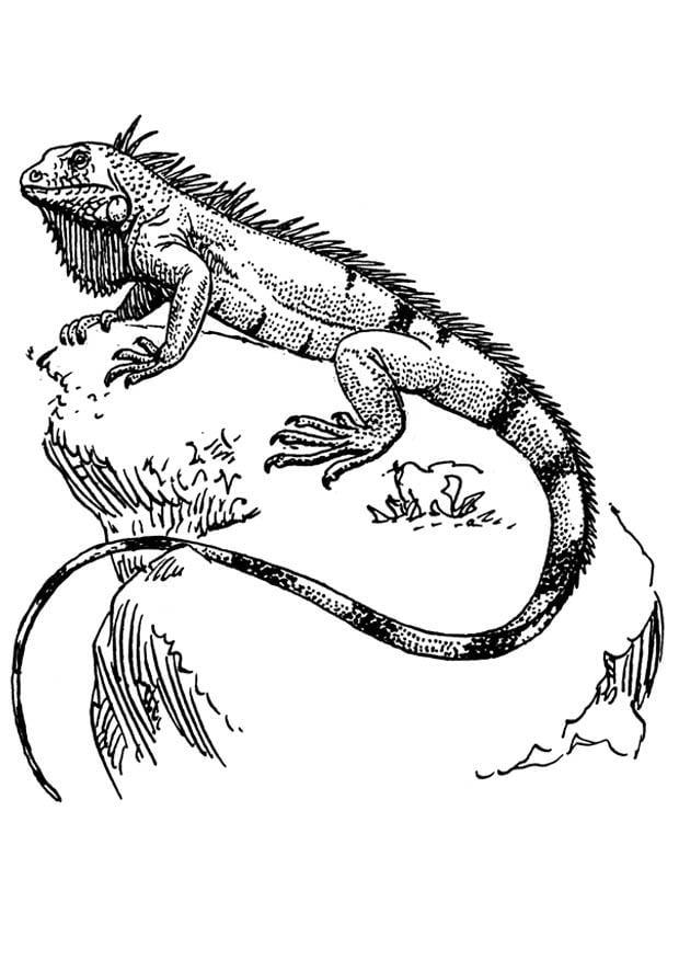 disegno da colorare iguana