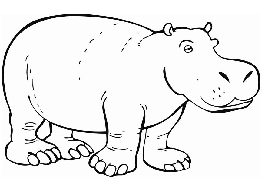 Disegno da colorare ippopotamo cat 12842 - Coloriage hippopotame ...