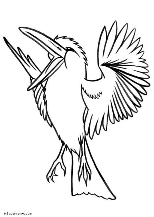 Kleurplaat Met Vilt Disegno Da Colorare Kookaburra Cat 5607 Images