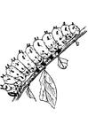 Disegno da colorare larva