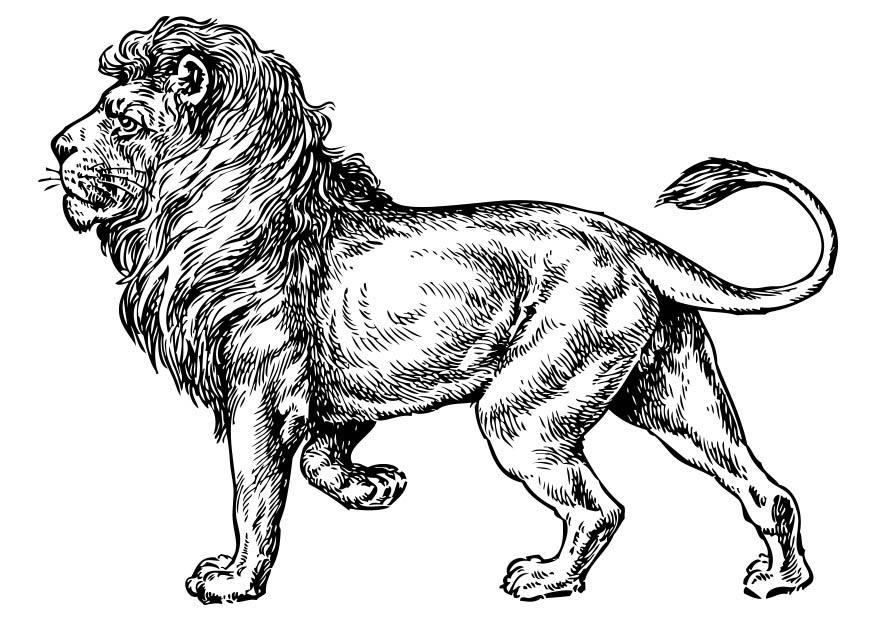 Kleurplaten Dieren Volwassenen Disegno Da Colorare Leone Cat 17373