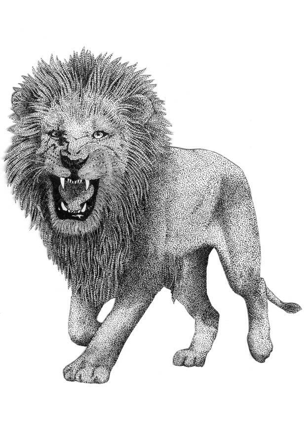 Conosciuto Disegno da colorare leone - Cat. 9394. DW76
