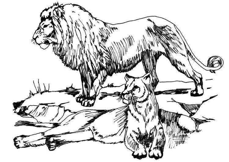 Disegno Da Colorare Leone E Leonessa Cat 16633