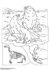 Disegno da colorare leoni marini