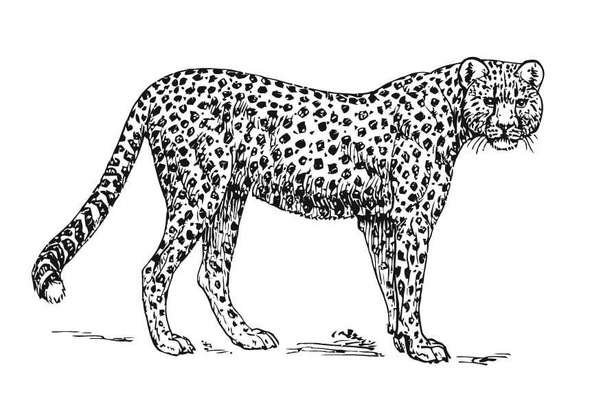 Disegno Da Colorare Leopardo Disegni Da Colorare E Stampare Gratis