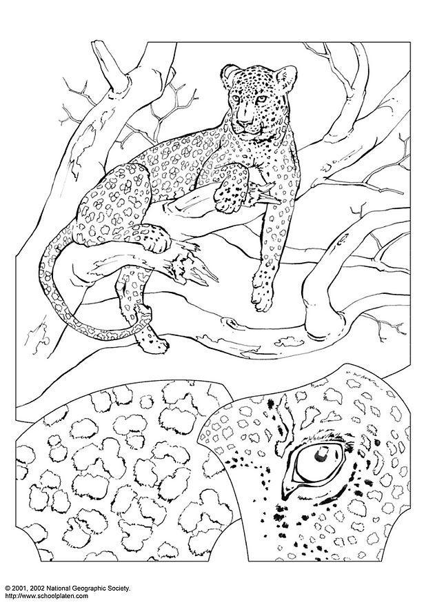 Kleurplaat Van Dieren Wilde Dieren Disegno Da Colorare Leopardo Cat 3069 Images