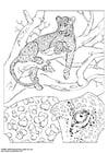 Disegno da colorare leopardo