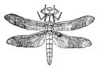 Disegno da colorare libellula