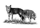 Disegno da colorare lupi