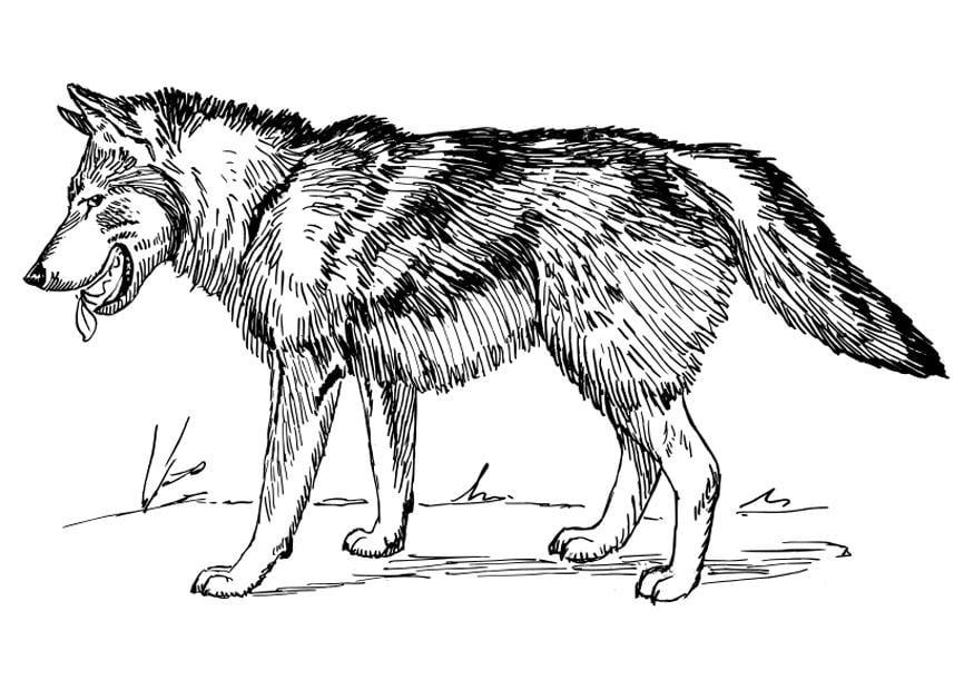 Disegno da colorare lupo Cat