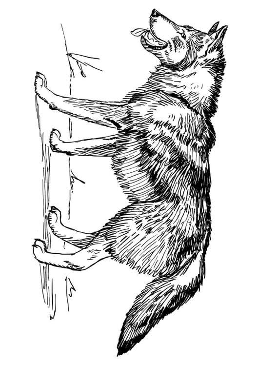Disegno da colorare lupo cat 22785 - Lupo mannaro immagini da colorare ...