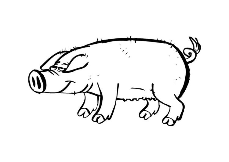 Disegno Da Colorare Maiale Cat 9697