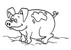 Disegno da colorare maiale