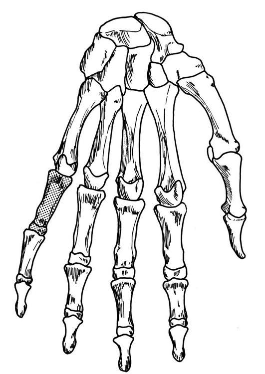 Disegno da colorare mano scheletro cat 18906 - Scheletro foglio da colorare ...