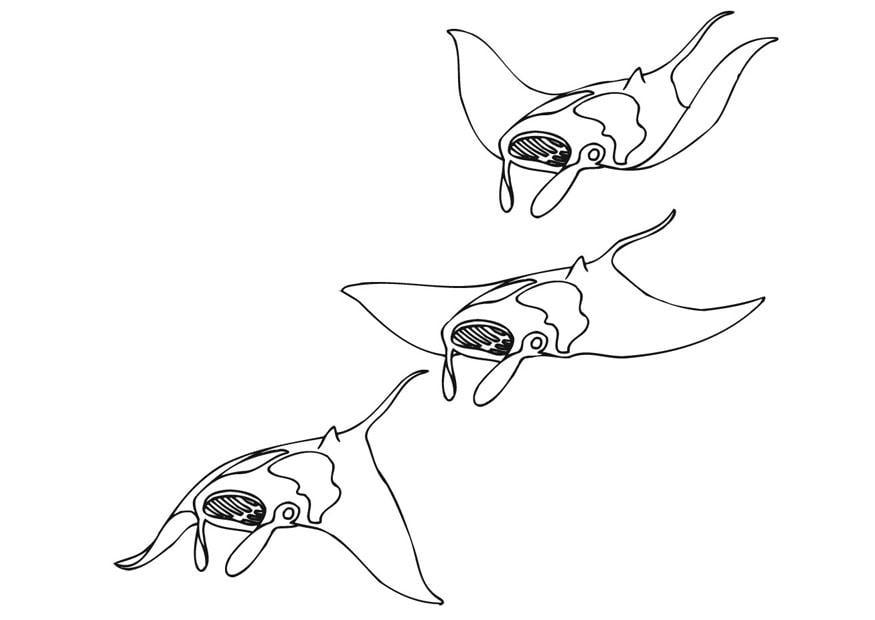 Disegno da colorare manta in mare cat 9484 images - Dessin raie manta ...