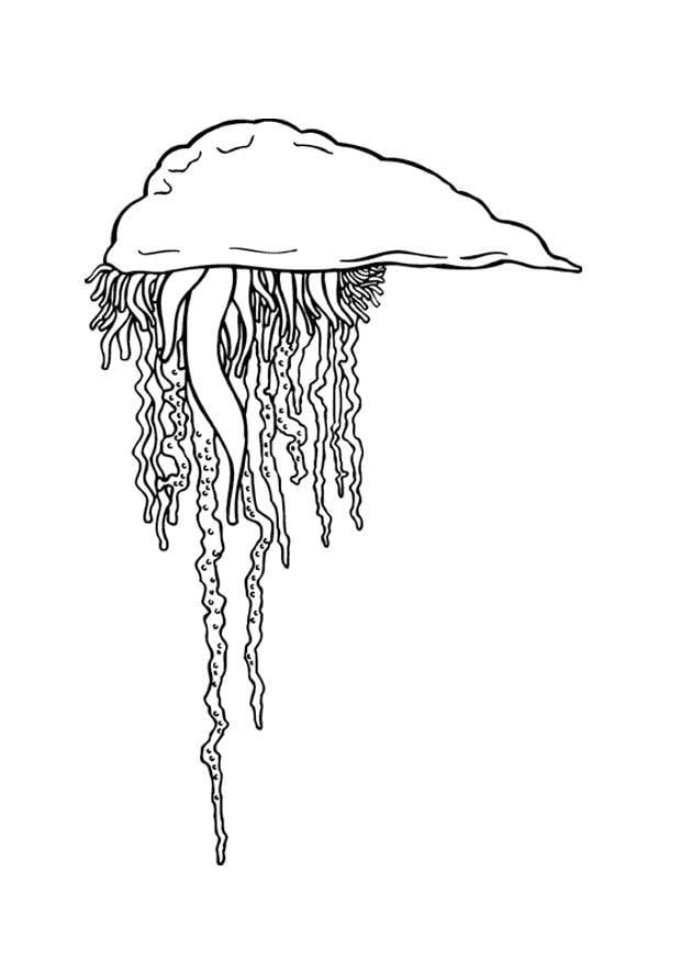 Disegno da colorare medusa cat 9373 for Medusa da colorare