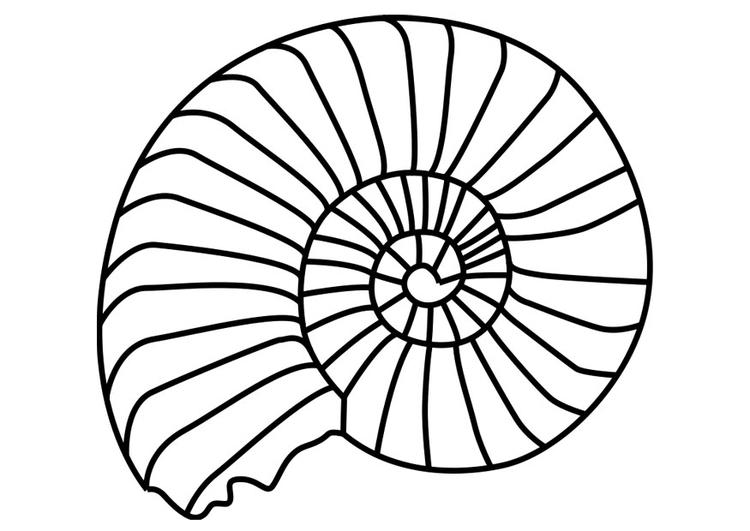 Disegno Da Colorare Mollusco Ammonite Cat 27194