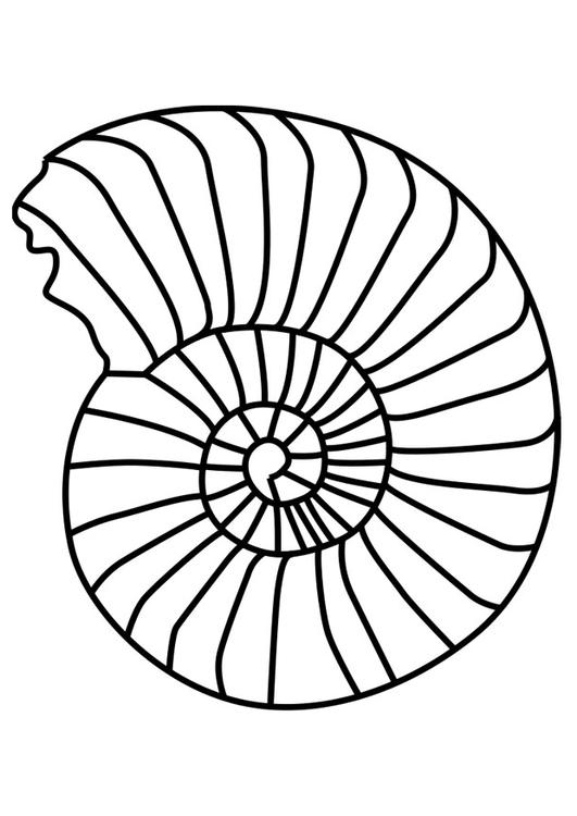 mollusco ammonite